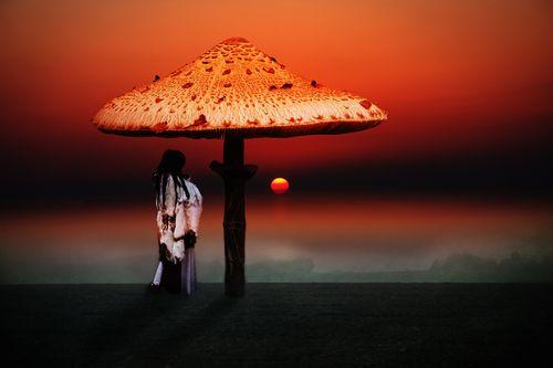 Dream-of-the-shaman