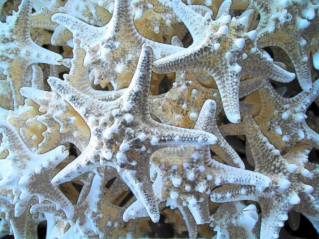 Starfish-mountain
