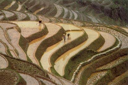 Rice-paddy-hexagram-58