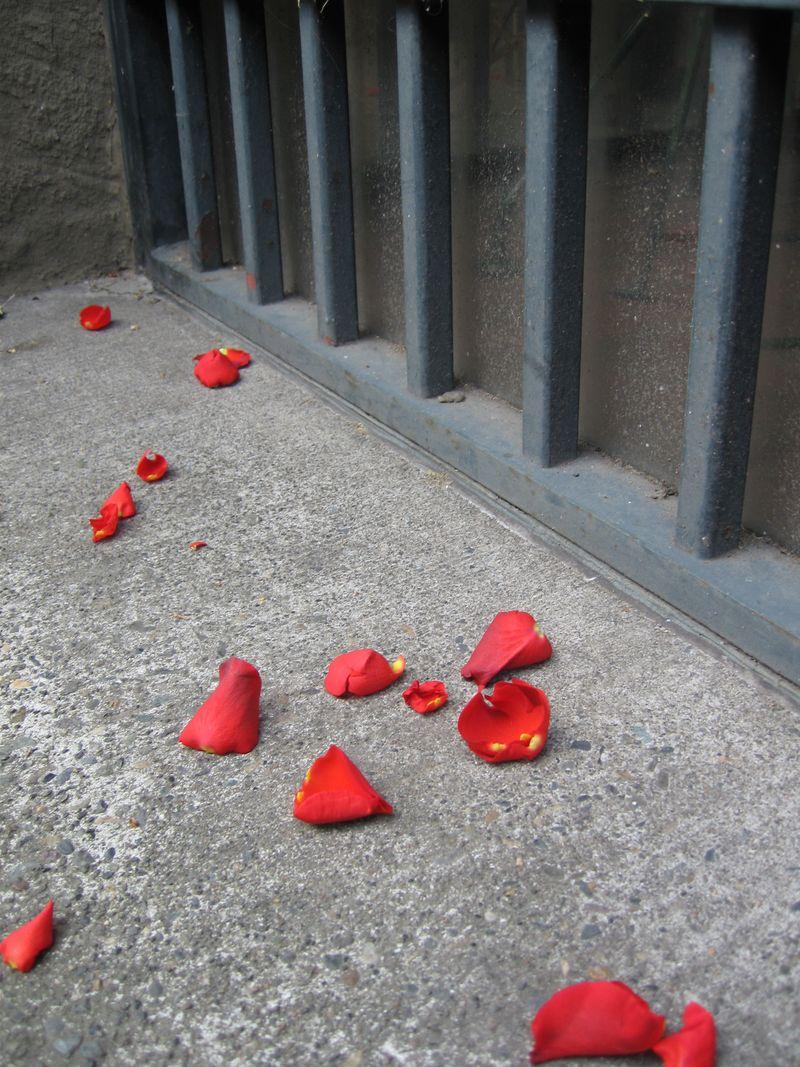 Petals-sidewalk