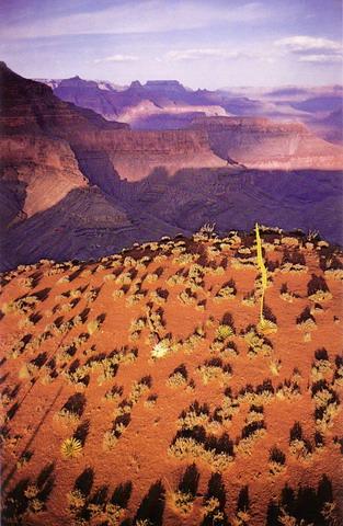 Joel-meyerowitz-grand-canyon