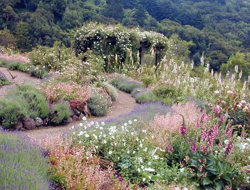 Imagine-berkeley-botanical-rose