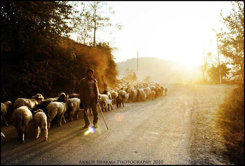Santiago-the-alchemist-shepherd-imagery