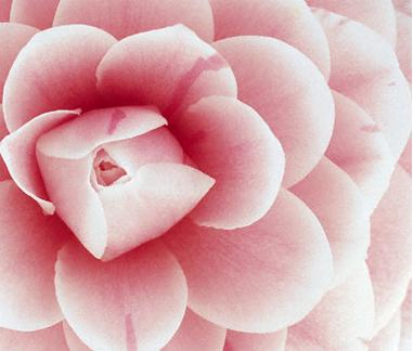 Flowermandala