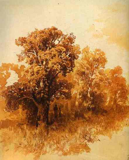 Oakgrove_2