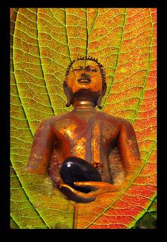 Buddhaolive